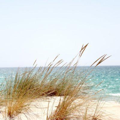 La beauté de la côte landaise